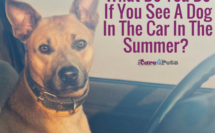 What Should I Do If I See A Dog In A Car In The Summer?