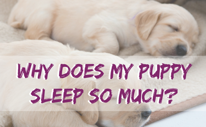Why Does My Puppy Sleep So Much?